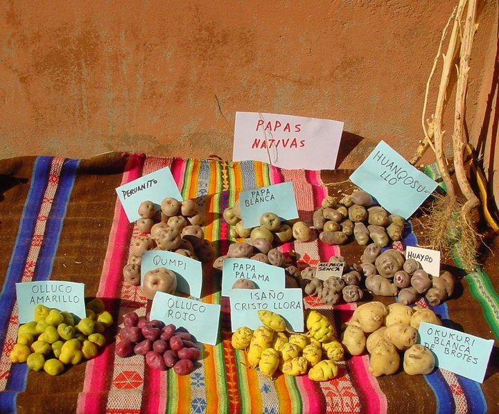 How is agrobiodiversity faring in Peru?